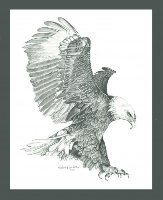 http://fineartamerica.com/featured/bald-eagle-in-a-dive-robert ...
