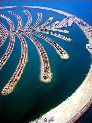 Dubai - Palm Tree
