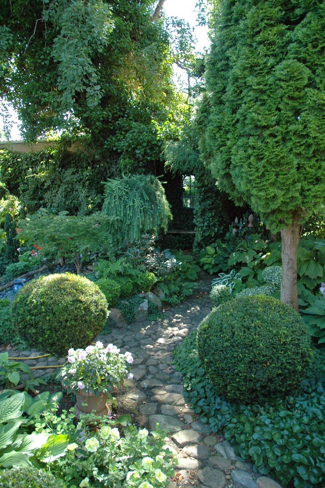 Tall Trees Provided Filtered Light For Green On Green Garden Of Pachysandra Hostas And Clipped
