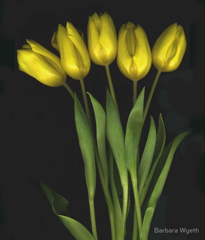 (Very) Yellow Tulips by Barbara Wyeth