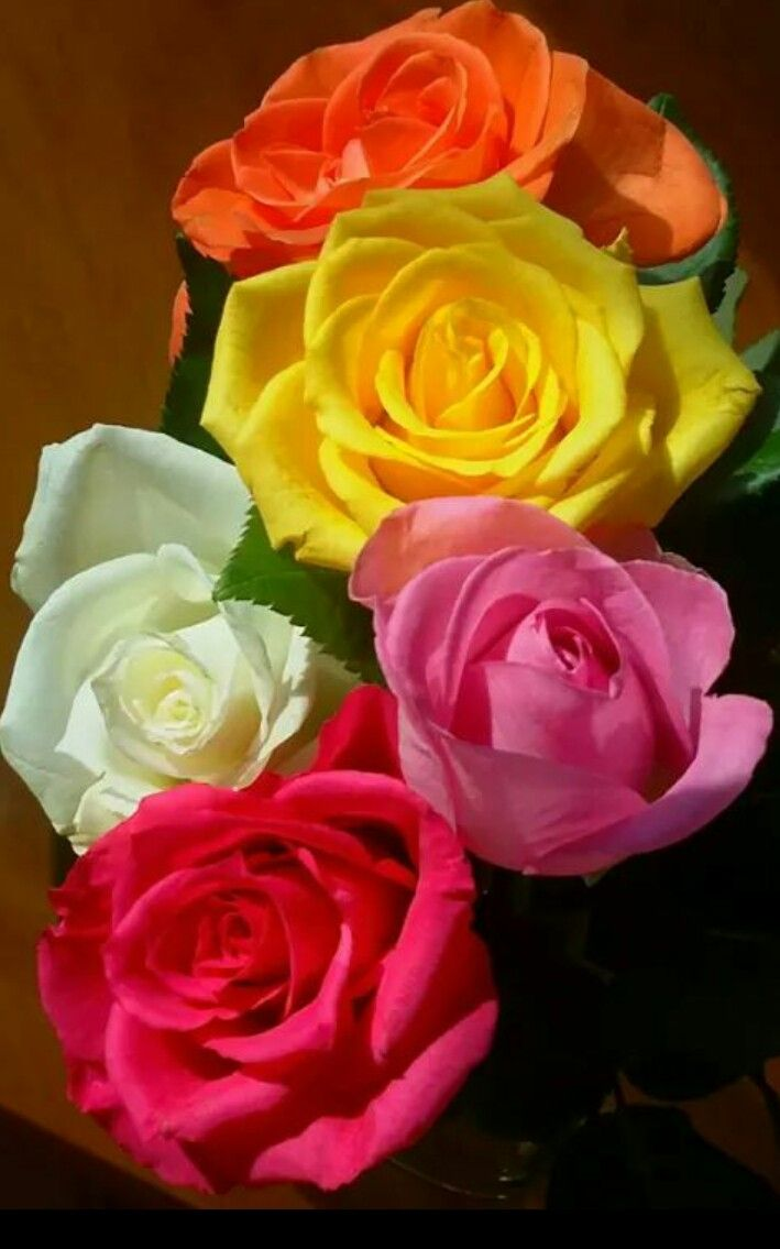 Pin by Charlapendse on Flowers | Pinterest | Rose and Flowers