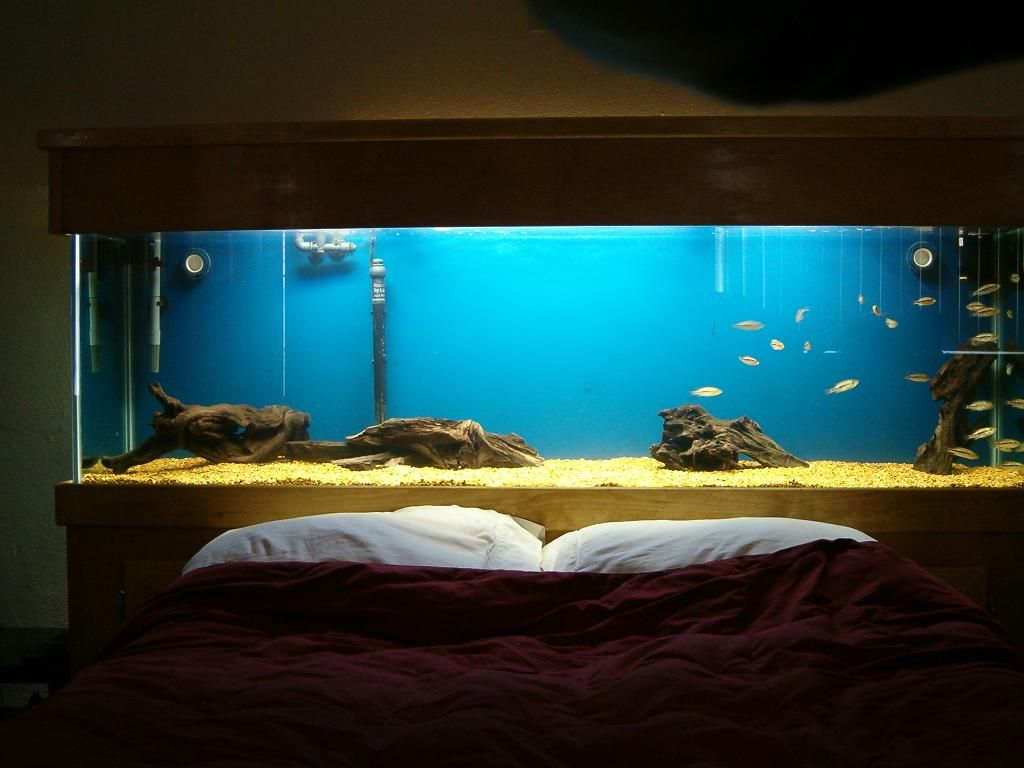 Fish aquarium bed frame - Bed With A Fish Tank Headboard Tanks Pinterest