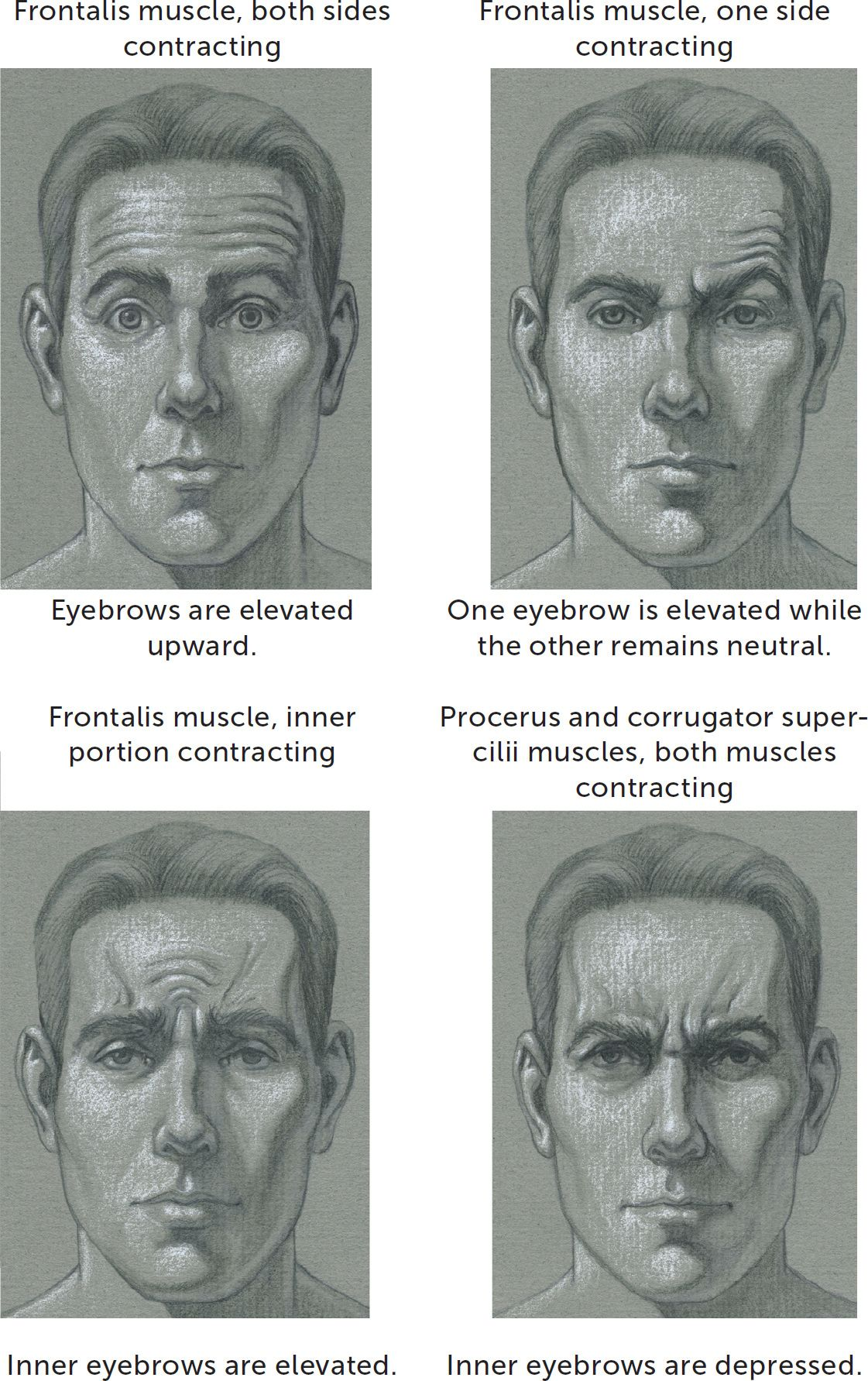 Facial Muscles And Expressions Manual Guide