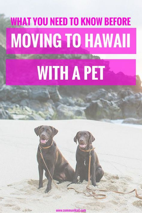 Moving To Hawaii With A Pet What You Need To Know