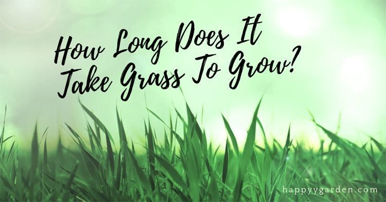 How long does it take grass to grow what is germination