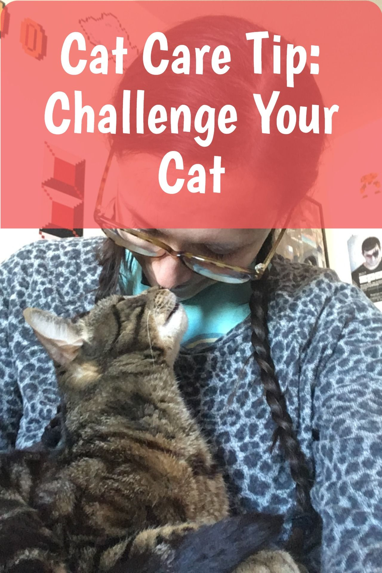 How To Keep A Cat Entertained In An Apartment Pro Tips In 2020 Cat Care Pet Care Cats Cat Care Tips