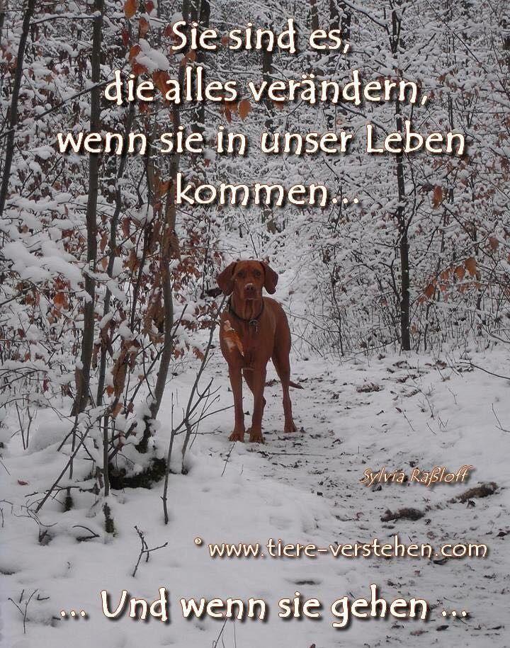 Der Beste Freund Trauer Um Hund Hund Bester Freund Hund Zitat