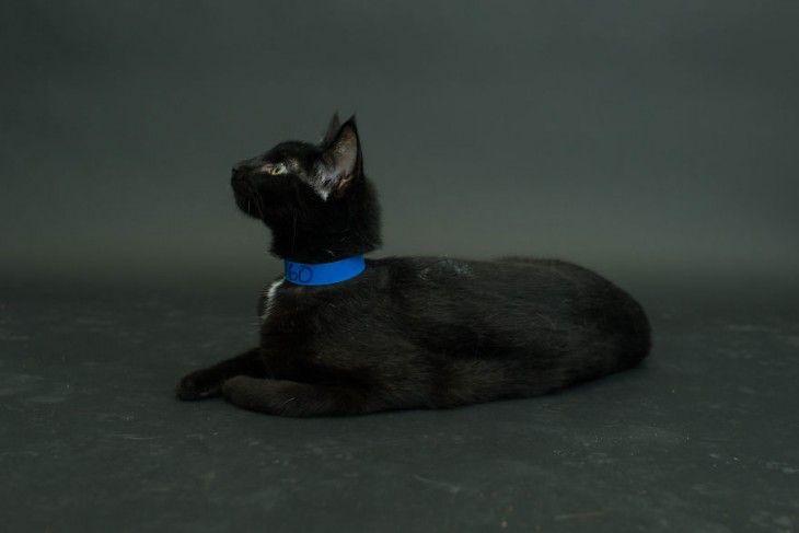 La gente a n cree que los gatos negros traen mala suerte - Los peces traen mala suerte ...