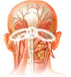 Trigger Points In The Suboccipital Muscle Group Are The Most Common Cause Of Tension Headaches Massage For Headache Tension Headache Trigger Points