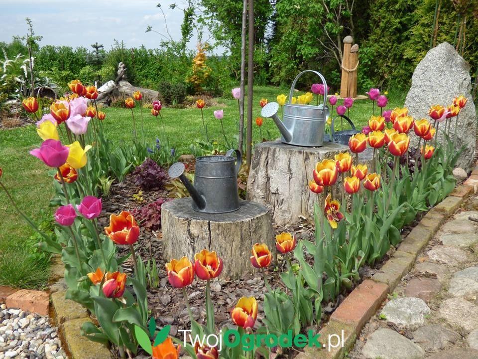 Rabata Tulipanowa Plants