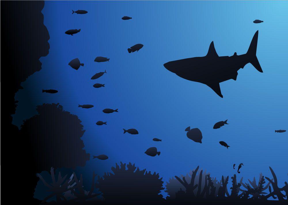 Best Shark Underwater Background Underwater Mural Wallpaper 640 x 480