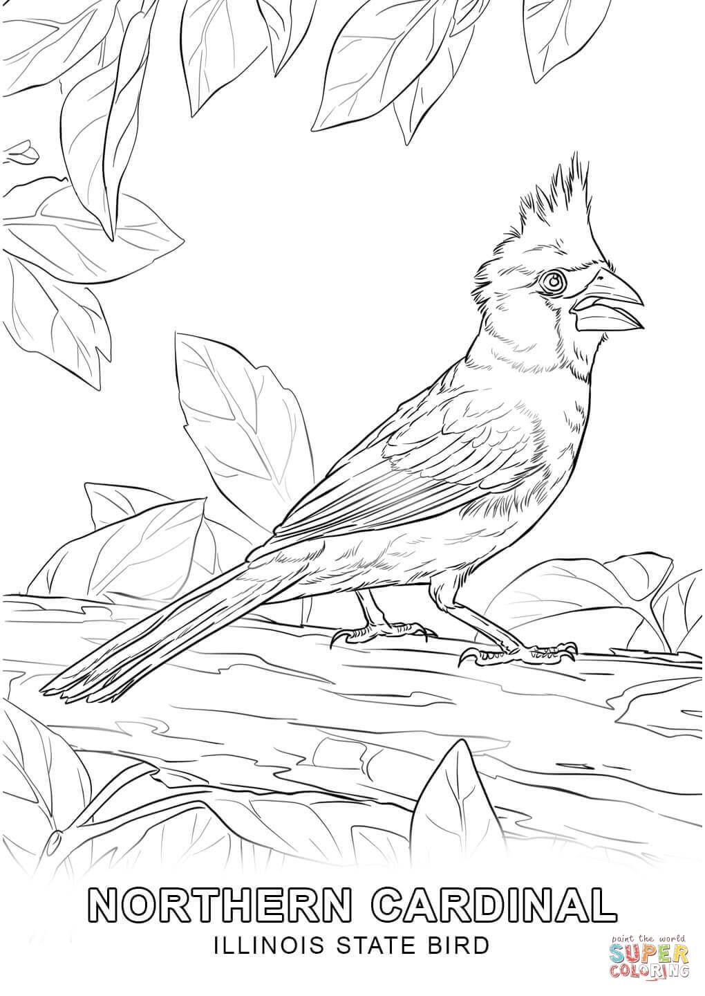 Illinois State Bird Coloring Page Jpg 1020 1440