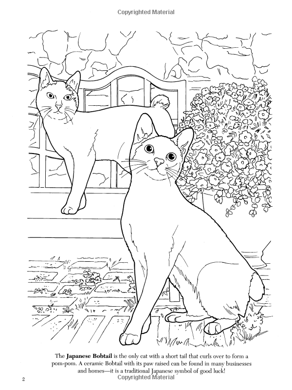 The Cat Lovers Coloring Book Dover Nature Ruth Soffer 9780486462004 Amazon Books