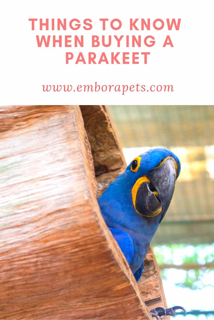 Buying Parakeets At Petsmart 5 Things To Know Before You Buy