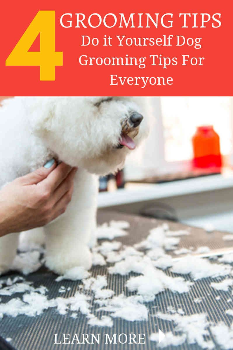 Whether Young Or Old Dogs Need Grooming Regularly However Some