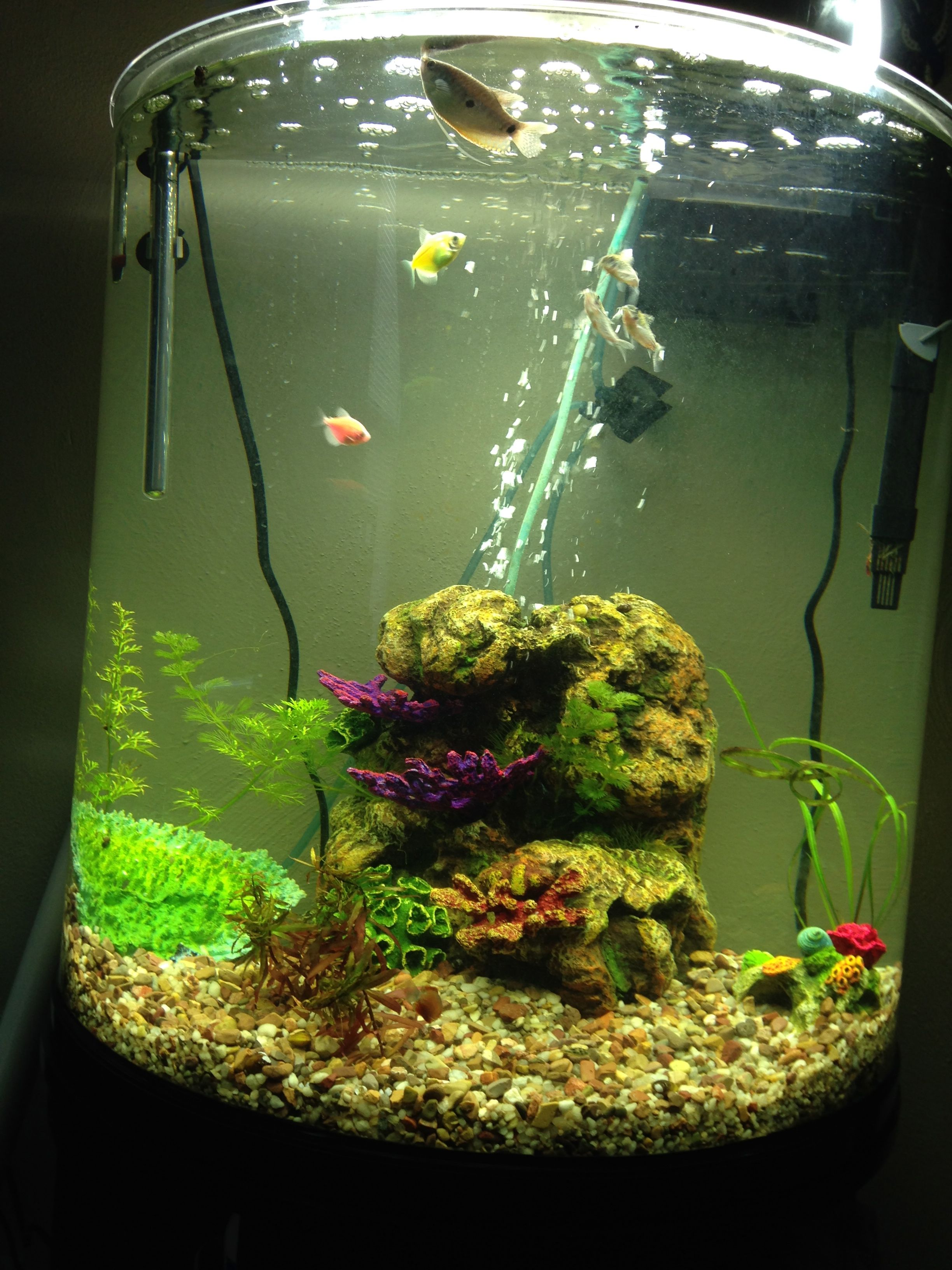 Freshwater fish tank live plants - Using Live Plants In Your Home Aquarium