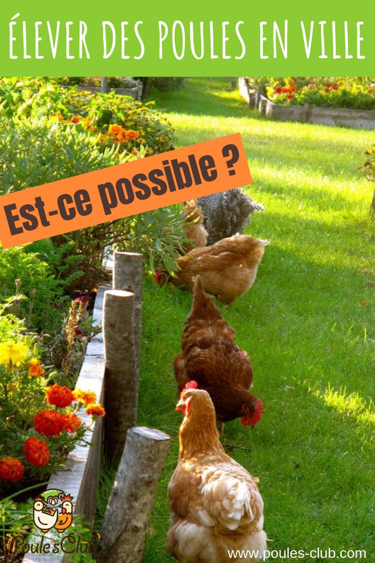 Mettre Des Poules Dans Son Jardin poules en ville dans un petit jardin c'est possible