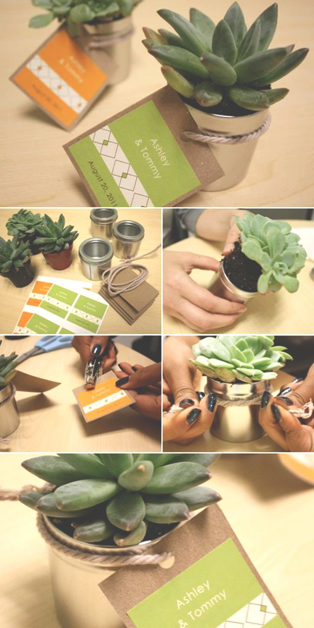 Wedding Favor Gift Ideas. Succulent Party FavorsDiy ...