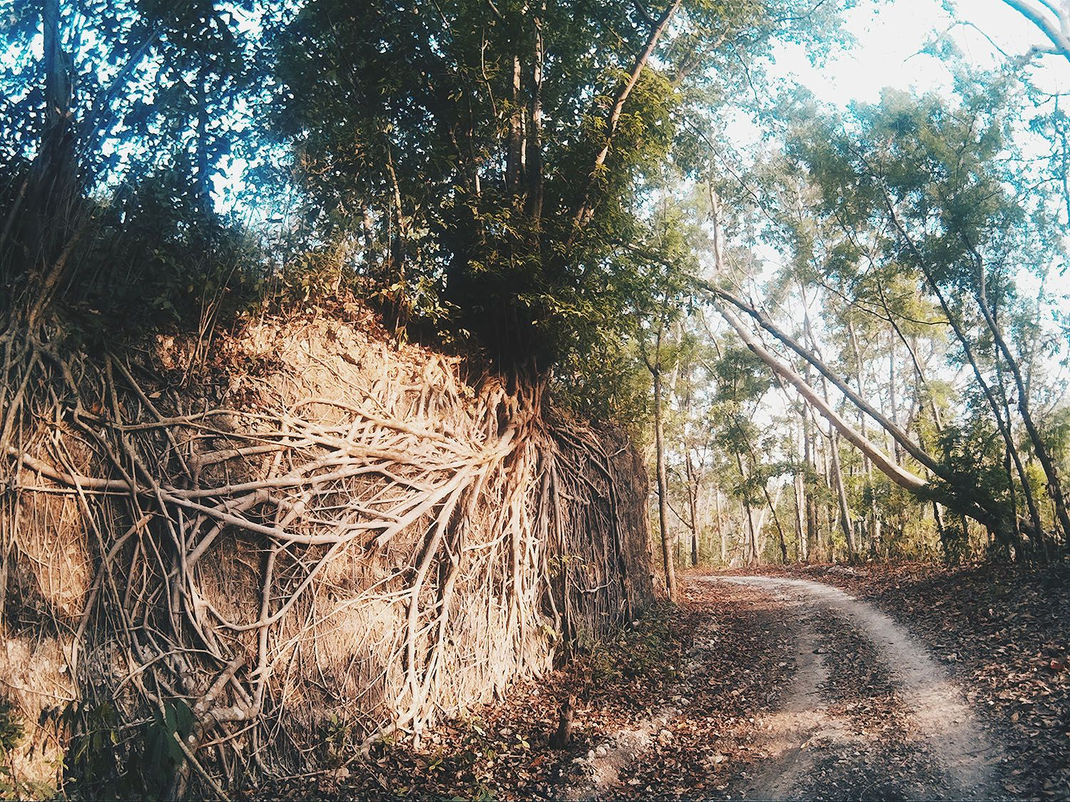 A compilation of photographs from my morning walks. Click to view more <3 :)