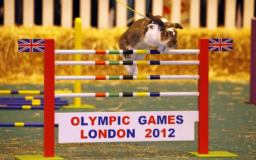 A competitor clears a jump during the Rabbit Show Jumping event at the London Pet Show 2012