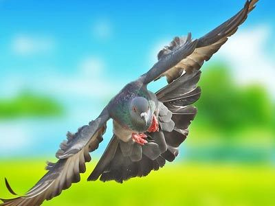 Flying Bird Pictures 10 Most Amazing Hd Wallpaper Cover Photos Bird Pictures Wildlife Nature Wildlife Photography