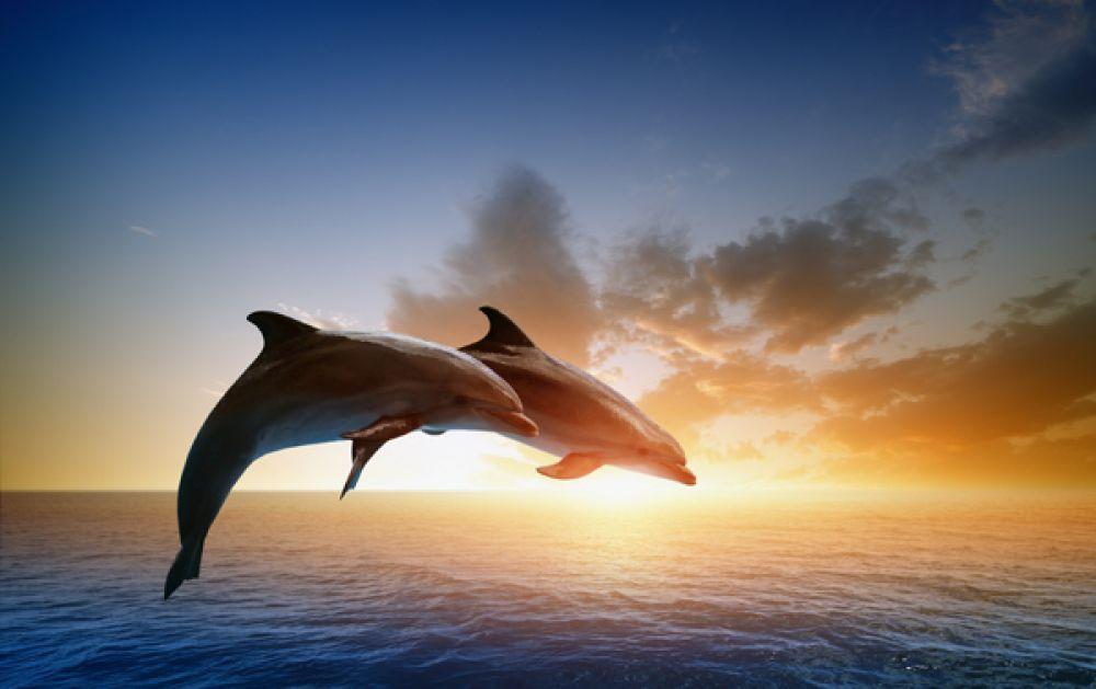 39 delfine im sonnenuntergang zum ausmalen  besten bilder
