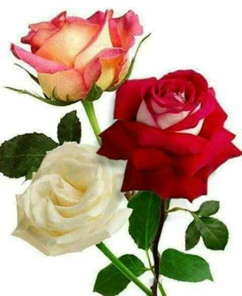 Pin de Rosita Padilla en Bellas rosas Pinterest Rosas, Corazones - rosas y corazones