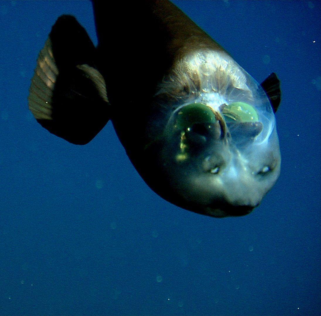 Animales marinos raros 3
