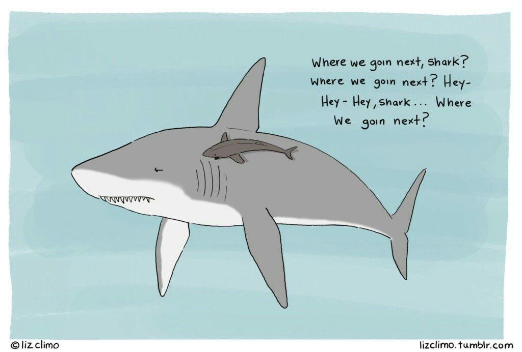 shark problems | feeling sharky | Shark puns, Cute comics