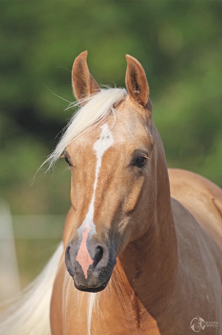 Penny Poster Pferde Seelenfreunde Pferde Pferdebilder