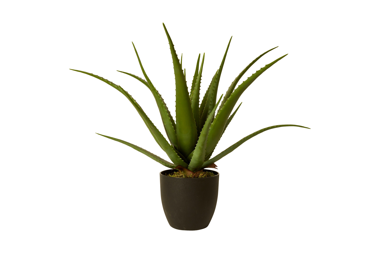 Image Plante Aloe Vera speedtsberg naturtro kunstig aloe vera plante i sort krukke