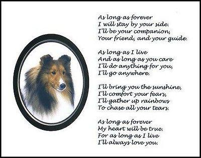 Beautiful Shetland Sheepdog Print As Long As Forever Poem Photo