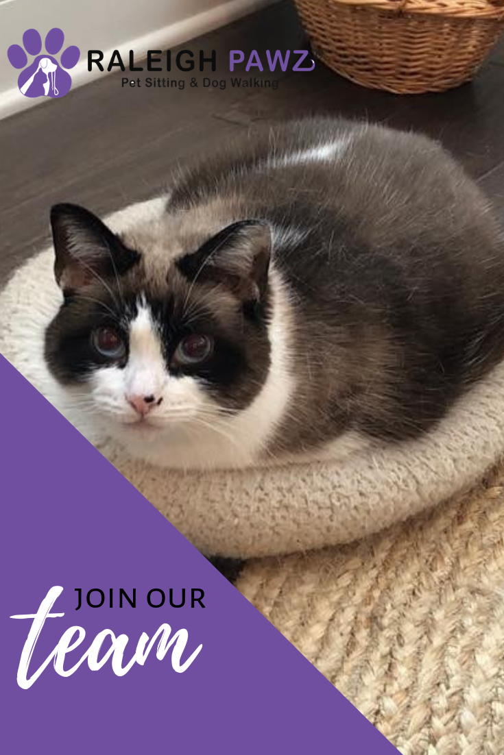 Our Team Is Growing If You Are Interested In Joining The Raleigh Pawz Team Of Dedicated Pet Sitters And Dog Walke Dog Walking Services Pet Sitters Cat Sitting