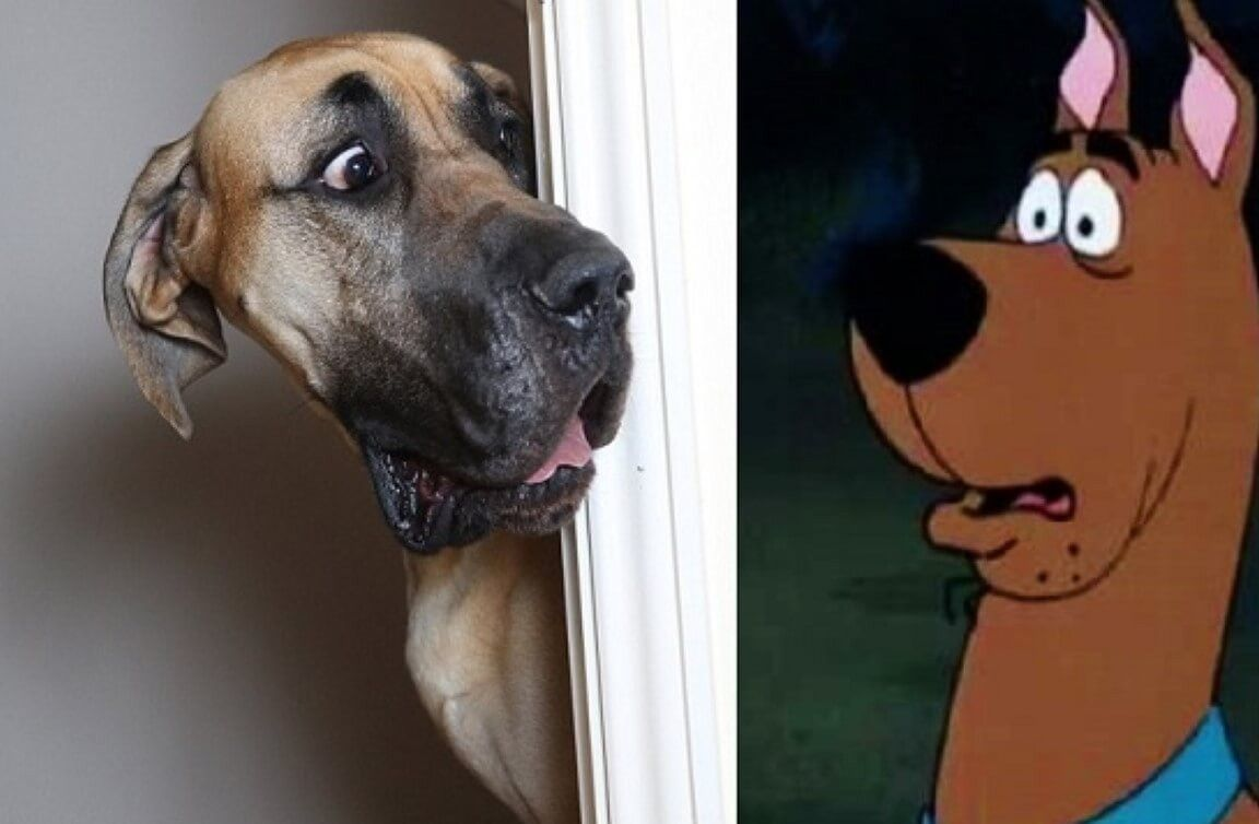 Revealed Scooby Doo Our Beloved Dog Has An Uncanny Twin Named