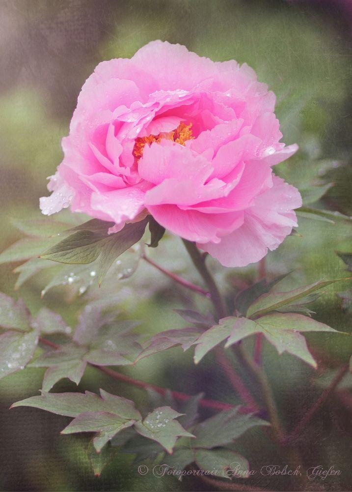 blooms-et-champis: *** par Anna Bolsch