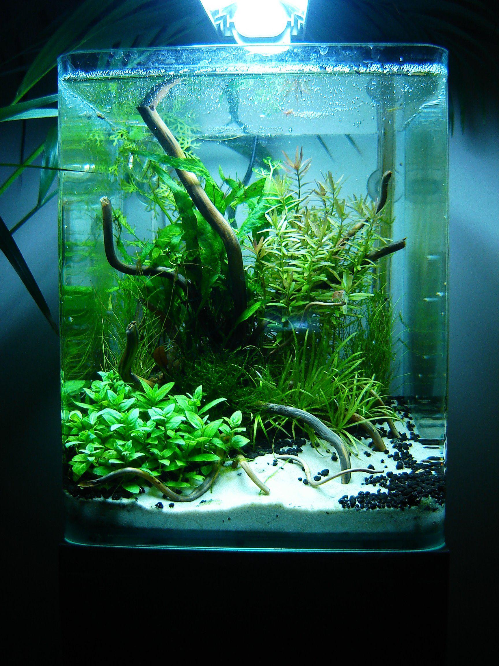 Layout by Phanou. #aquascaping | Aquarium design ...