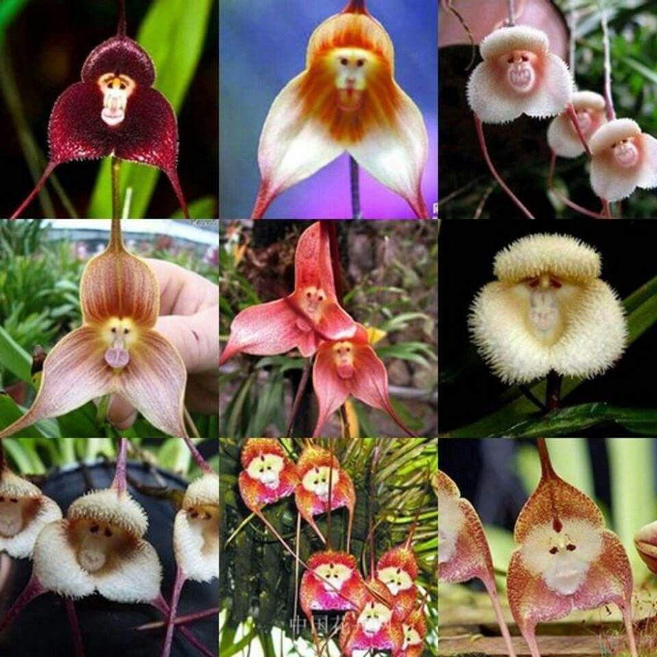 Pin by maya torres on orquideas pinterest flora