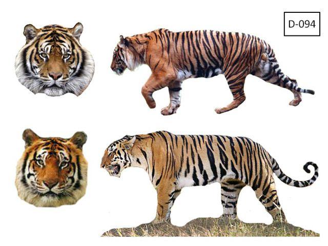 Mengungkap Sosok Misterius Harimau Jawa Harimau Jawa Anatomi Kucing Menggambar Harimau