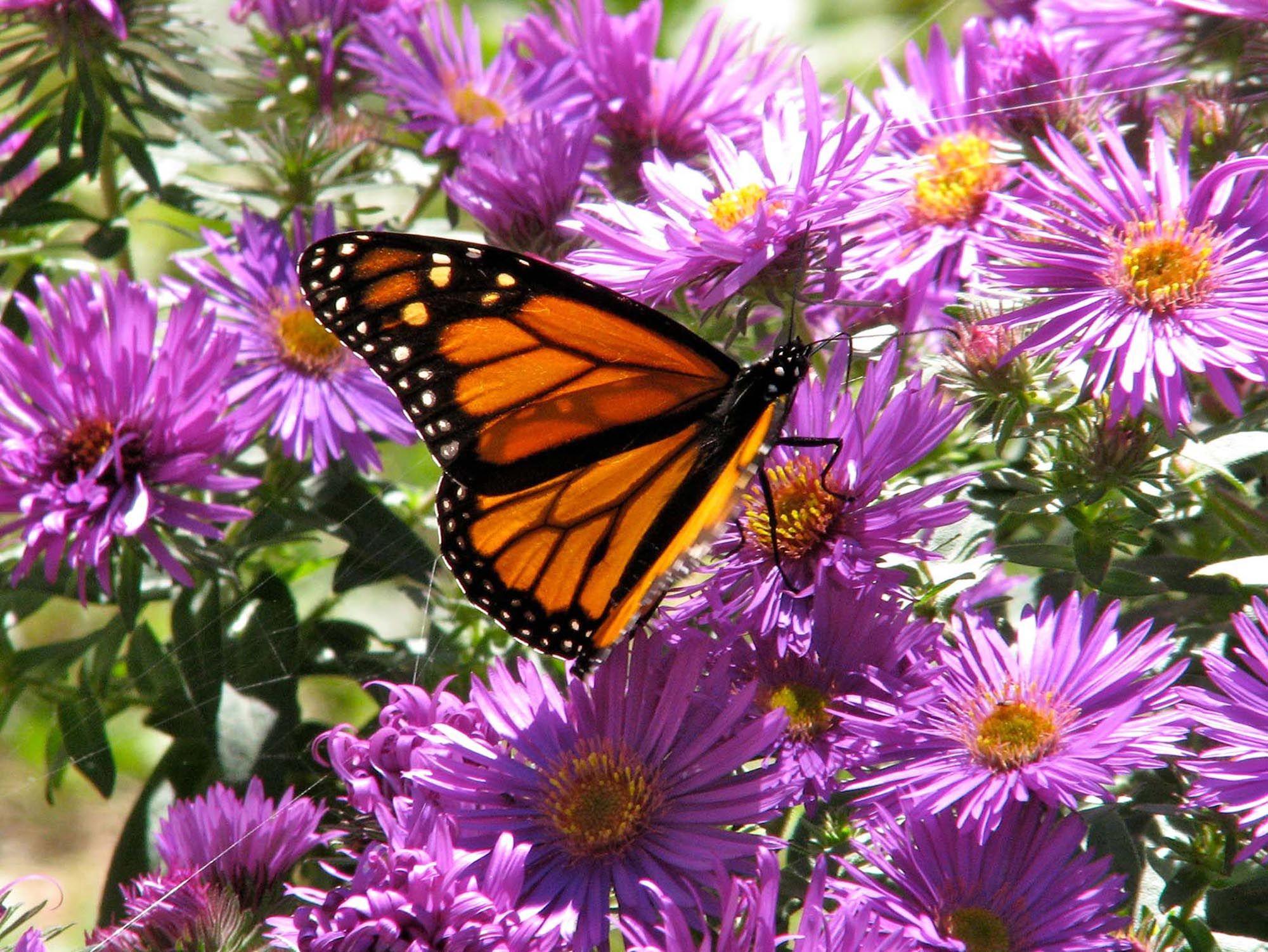 Butterfly Garden | | Dallas Morning News