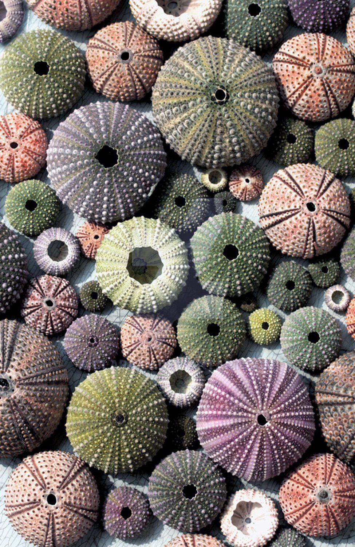 Sea Jewels Sea Urchin Shells, Switch Plate Cover, Wall Plate, Single, Home Decor