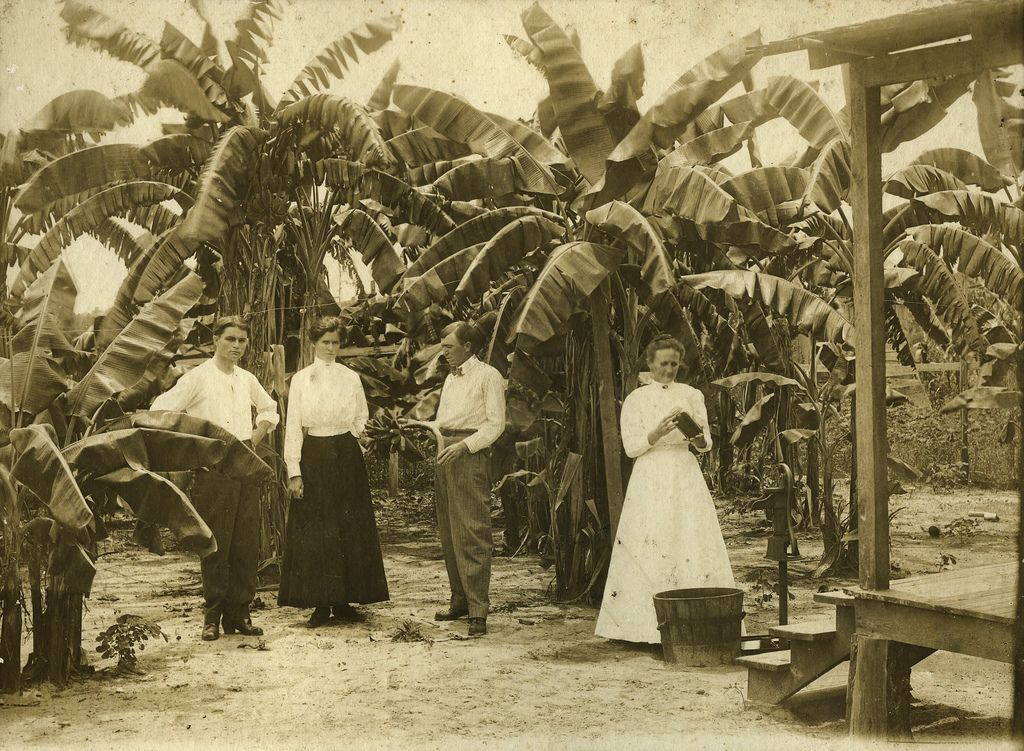 Image result for 1800's caribbean (With images) Trinidad