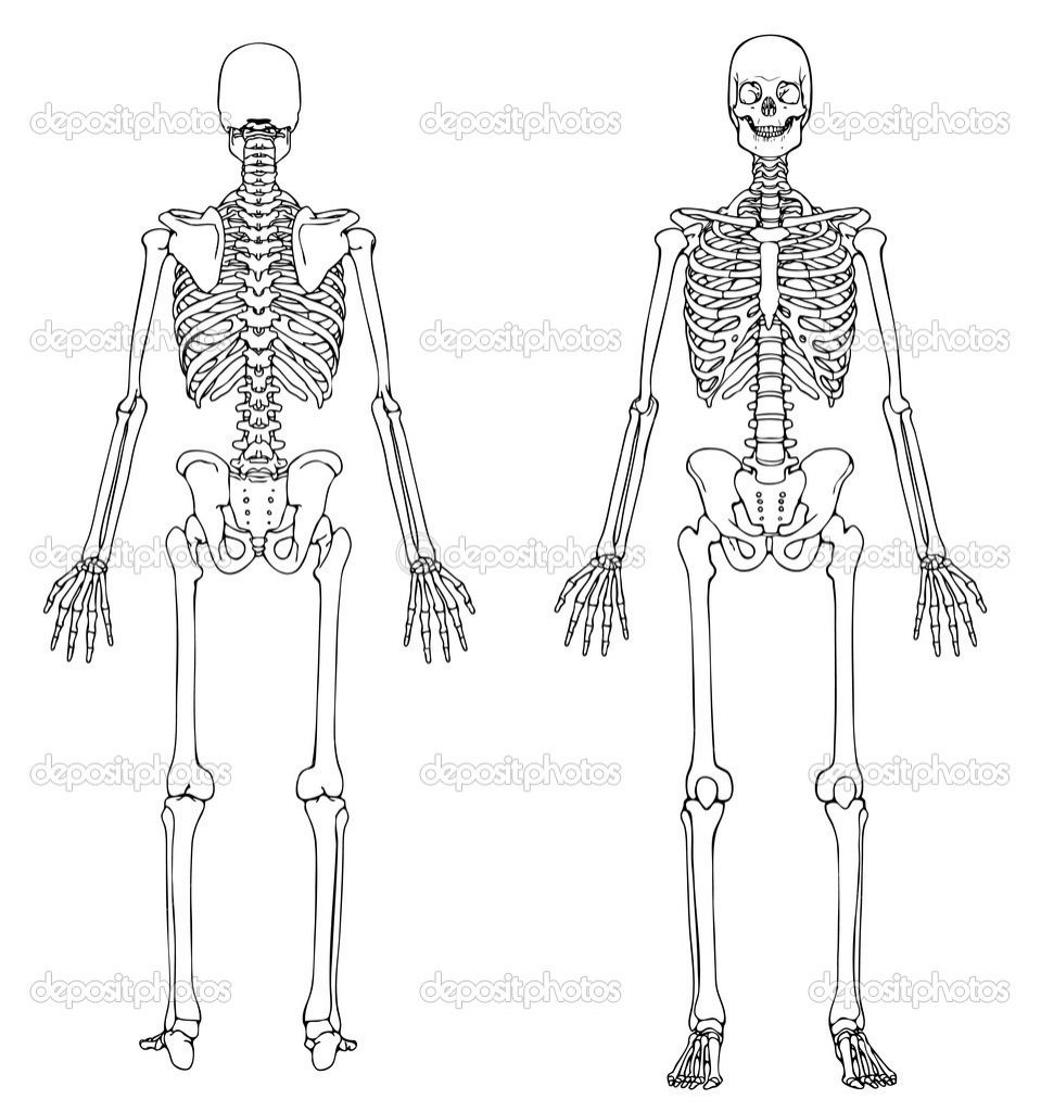 unlabeled diagram of the human skeleton human anatomy. Black Bedroom Furniture Sets. Home Design Ideas