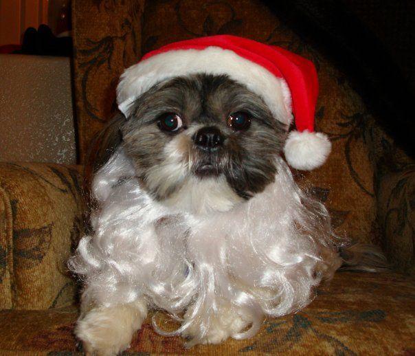 Santa's helper!