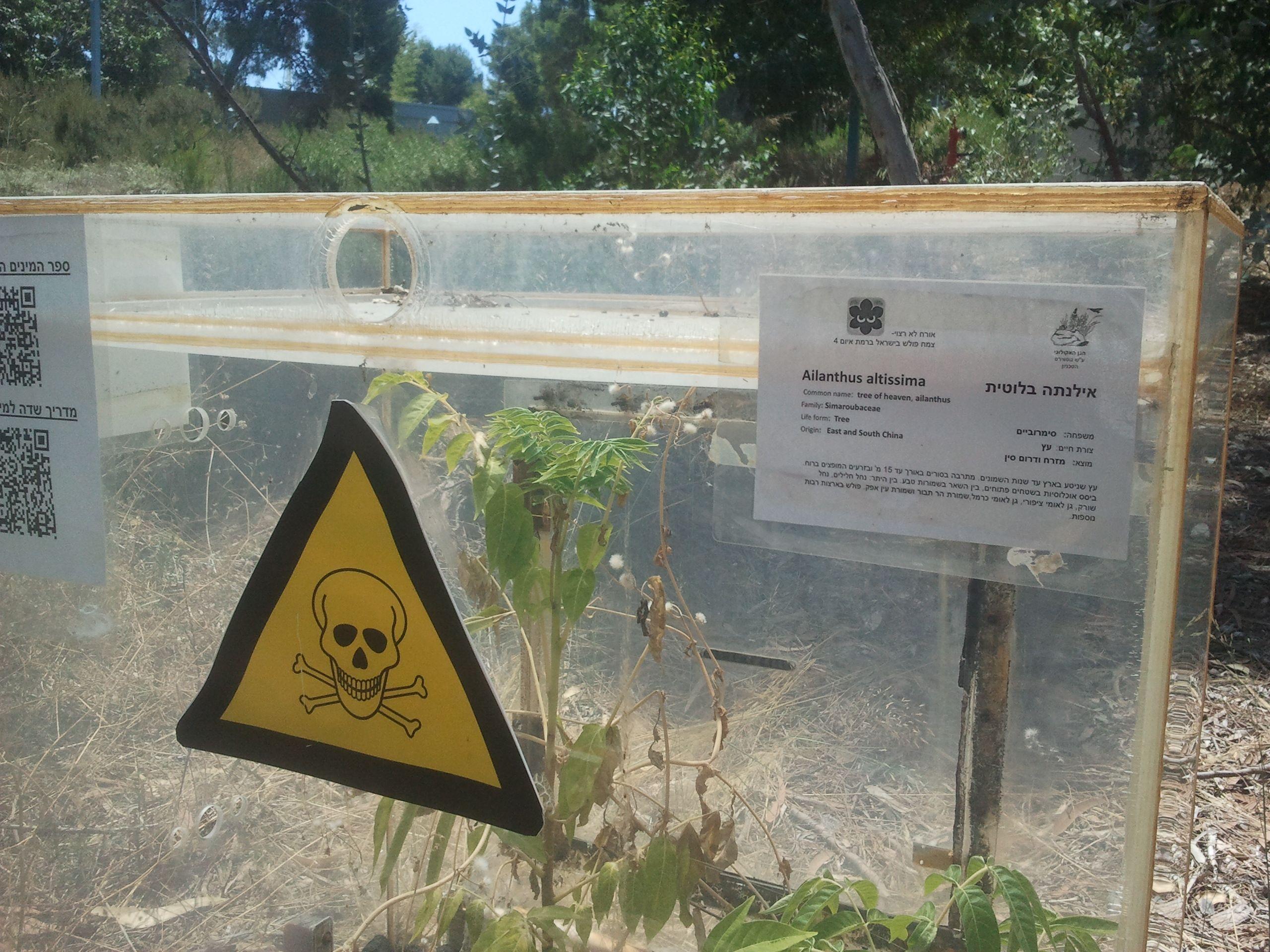 Invasive species! Technion botanic garden Haifa