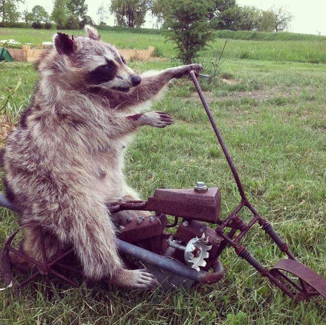 He's got eyewear. He's hairy. He's on a bike and he's got attitude...he qualifies!