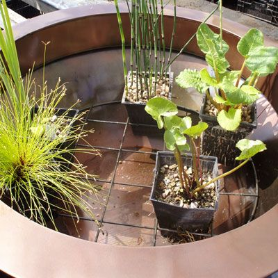 Planting Container Ponds Tips On Planting A Water Gardening Container Pond Feature Wi Container Water Gardens Small Water Gardens Water Features In The Garden