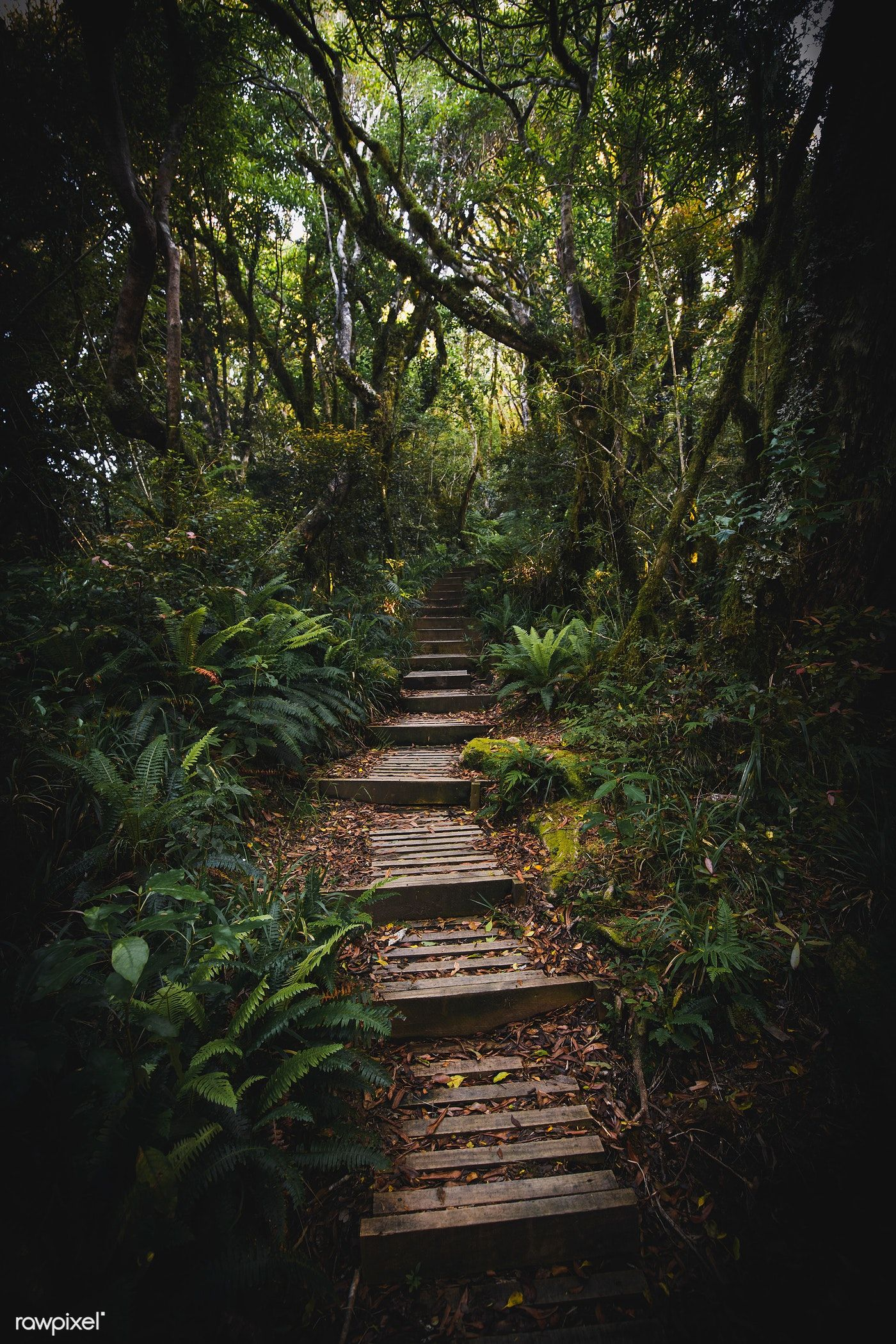 Download premium image of Pathway in a tropical jungle 595311