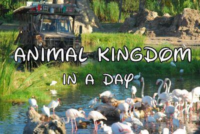 Disney World Animal Kingdom Tips/Overview #animalkingdom