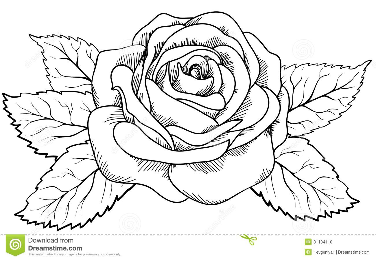 Line Drawing Of Rose Flower : Drawing library page sketch pencil art