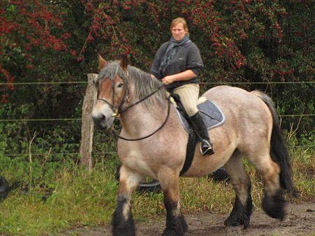 kaltblutpferde kaufen  GoogleSuche  Pferde Kaltbter Darft Horses CAVALOS SANGUE QUENTE VS